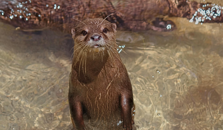 Otter1_edited