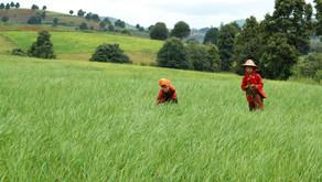 Tour Myanmar: Autentica Birmania, live like a local!