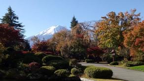 Japan Tour: Viaggio di nozze in Giappone