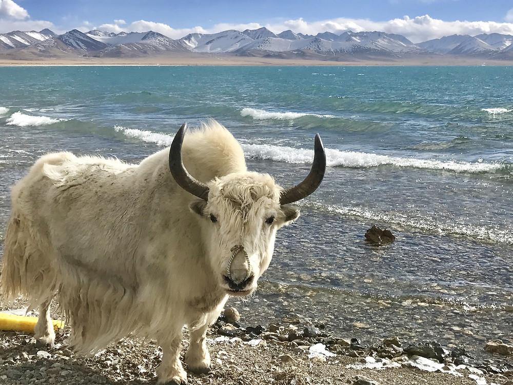 Lago delle Visioni - Lago Lhamo Latso