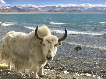 Lhamo Latso, il lago Sacro per il popolo Tibetano e per il Dalai Lama