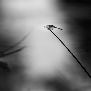 Libelle sw