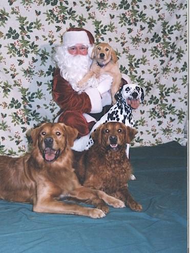 Alldogs_santa