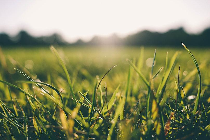 grass-meadow-sunshine-9056.jpg