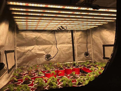 Grow light 3.jpg