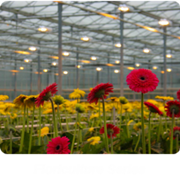 Grow Light 6.png
