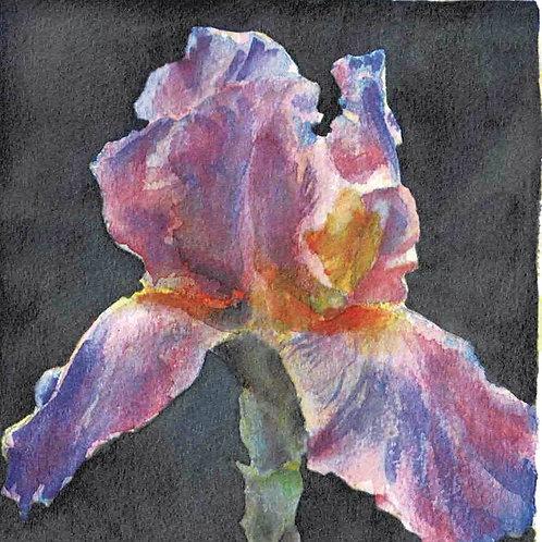 "Iris: Watercolor Giclee 6x6"""