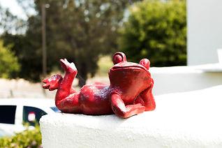 Red Frog (1 of 1).jpg