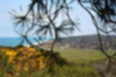 Torrey Pines (1 of 1).jpg