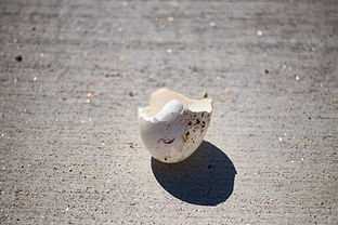 Egg on sidewalk (1 of 1).jpg