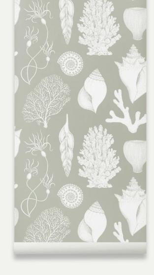 Katie Scott Shells Wallpaper