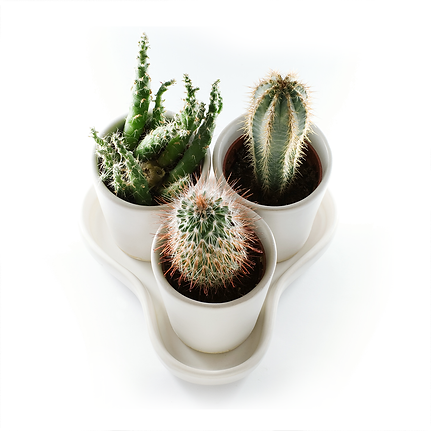 Cactus e Suculentas | Catálogo de Plantas do Site Dimensão da Natureza