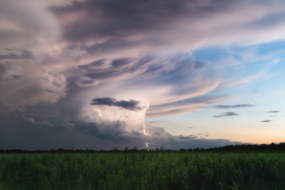 Lighting and storm over corn fields in St Augustine Florida. Landscape Photography.