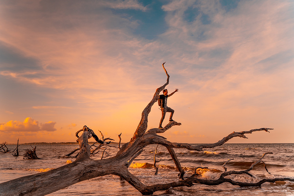 Man standing on driftwood tree during sunset.