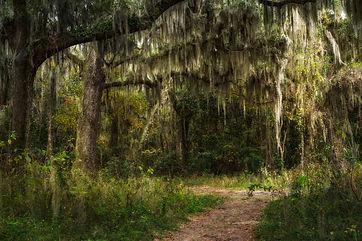 Dark Oaks and Moss (Paul Farace).jpg