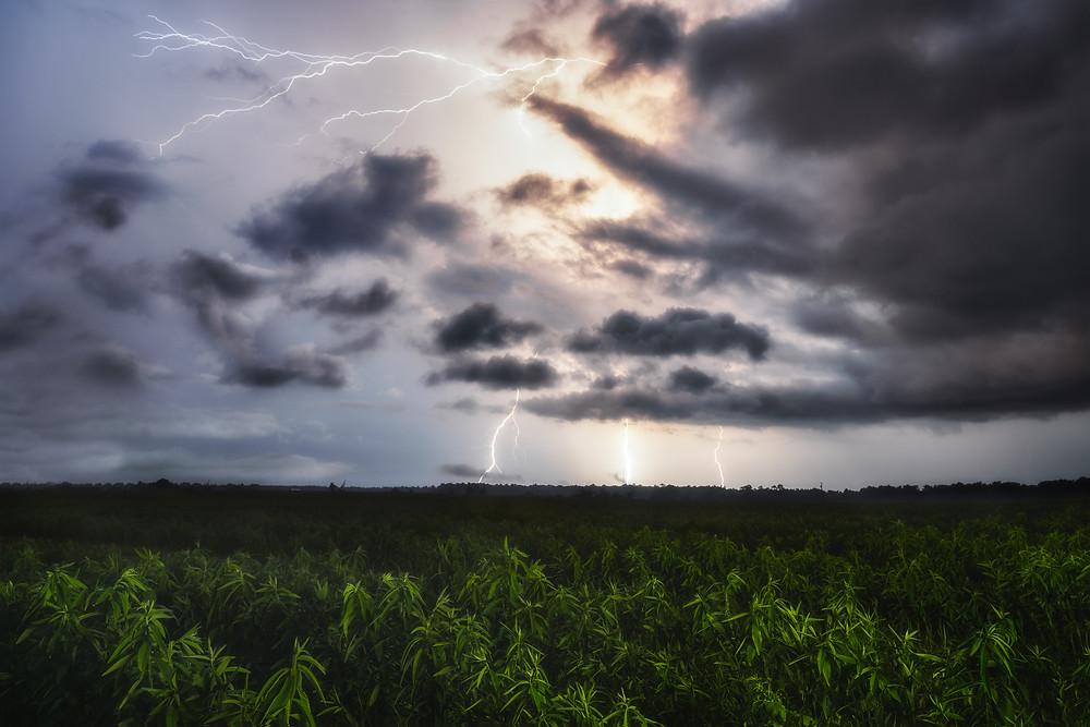 Lightning storm over corn fields in Florida.