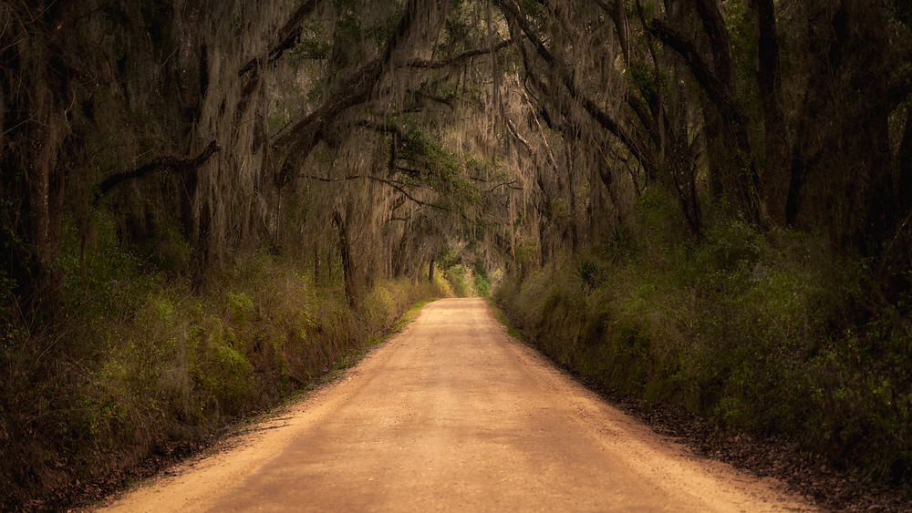 Country road with oak trees and spanish moss. Florida Landscape Photography.
