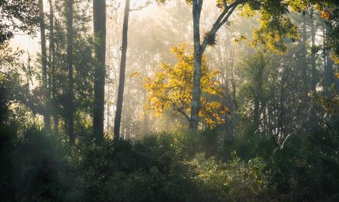 Foggy Sunrise at Home