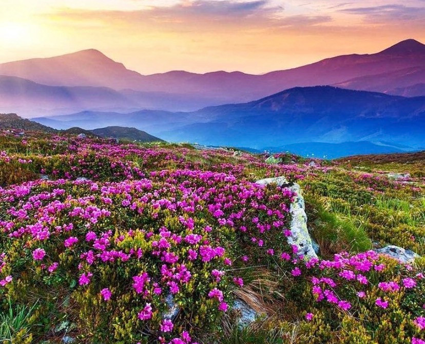 Valley of Flowers Uttarakhand | Romantic Places in India