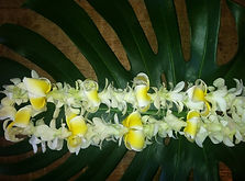 single-white-orchid-lei-with-plumeria-e1