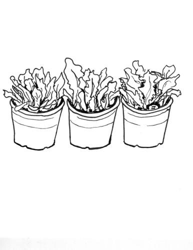 three salad greens plants.jpg