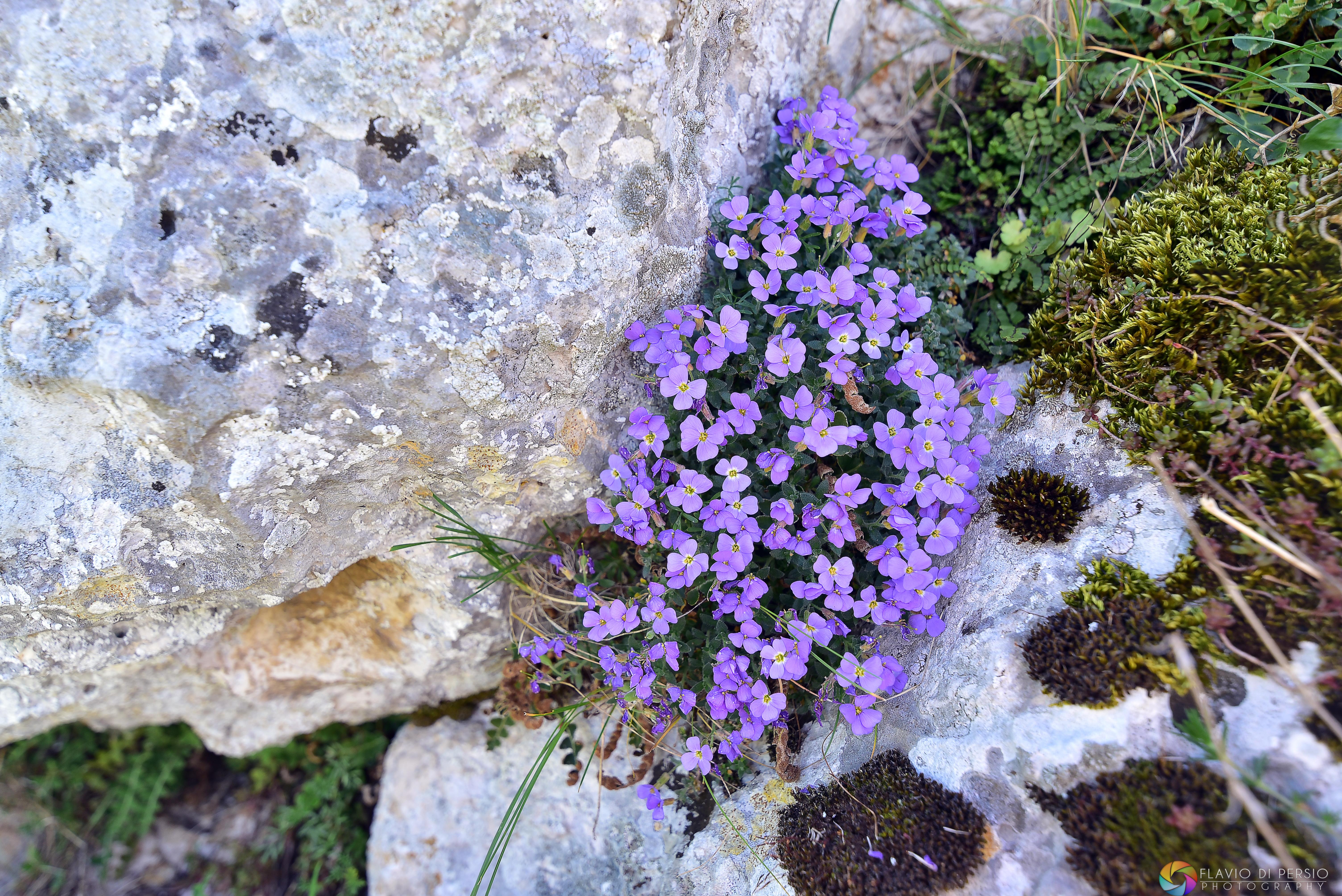 lungo il sentiero dei fiori