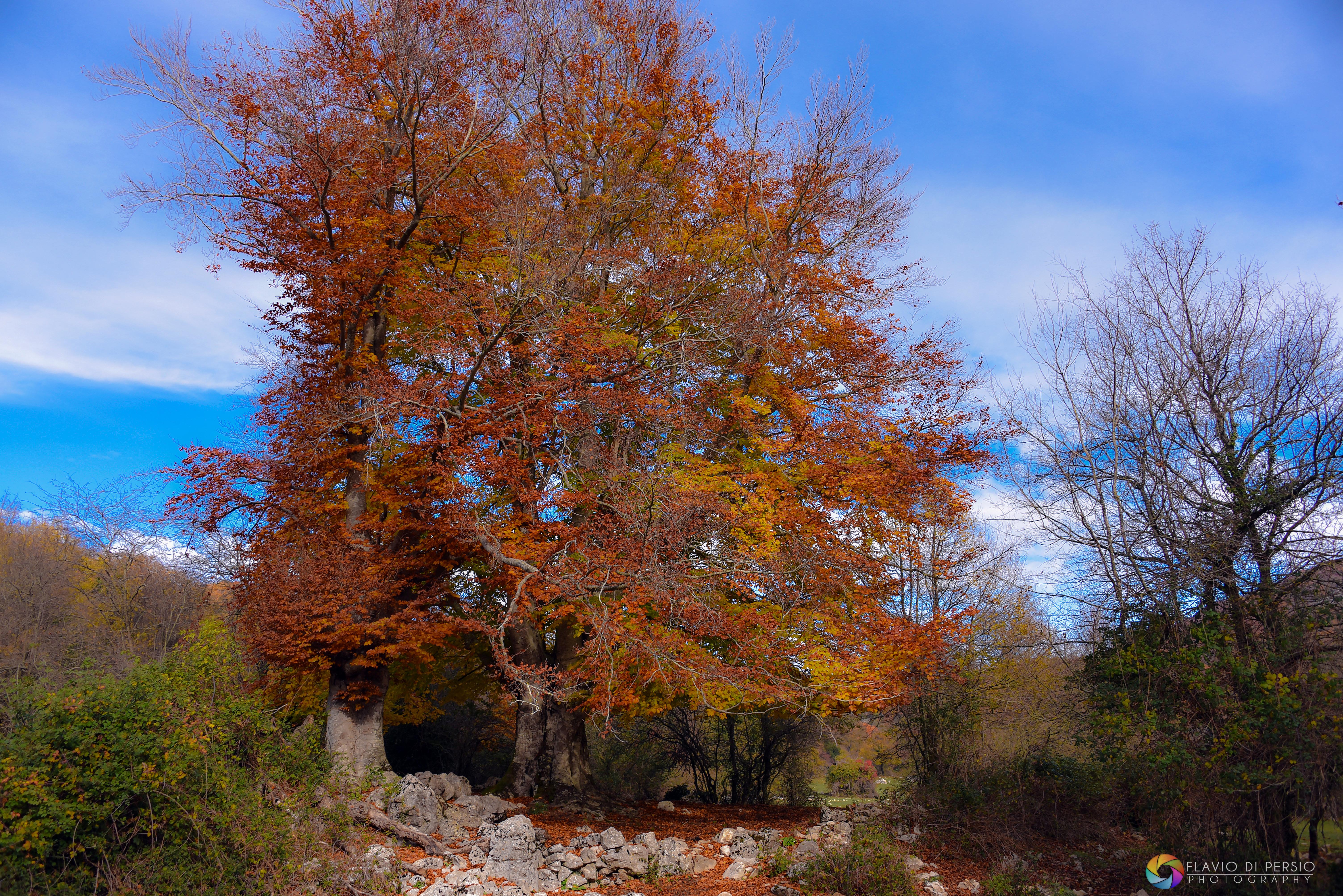 Monte Guardia nei Lucretili
