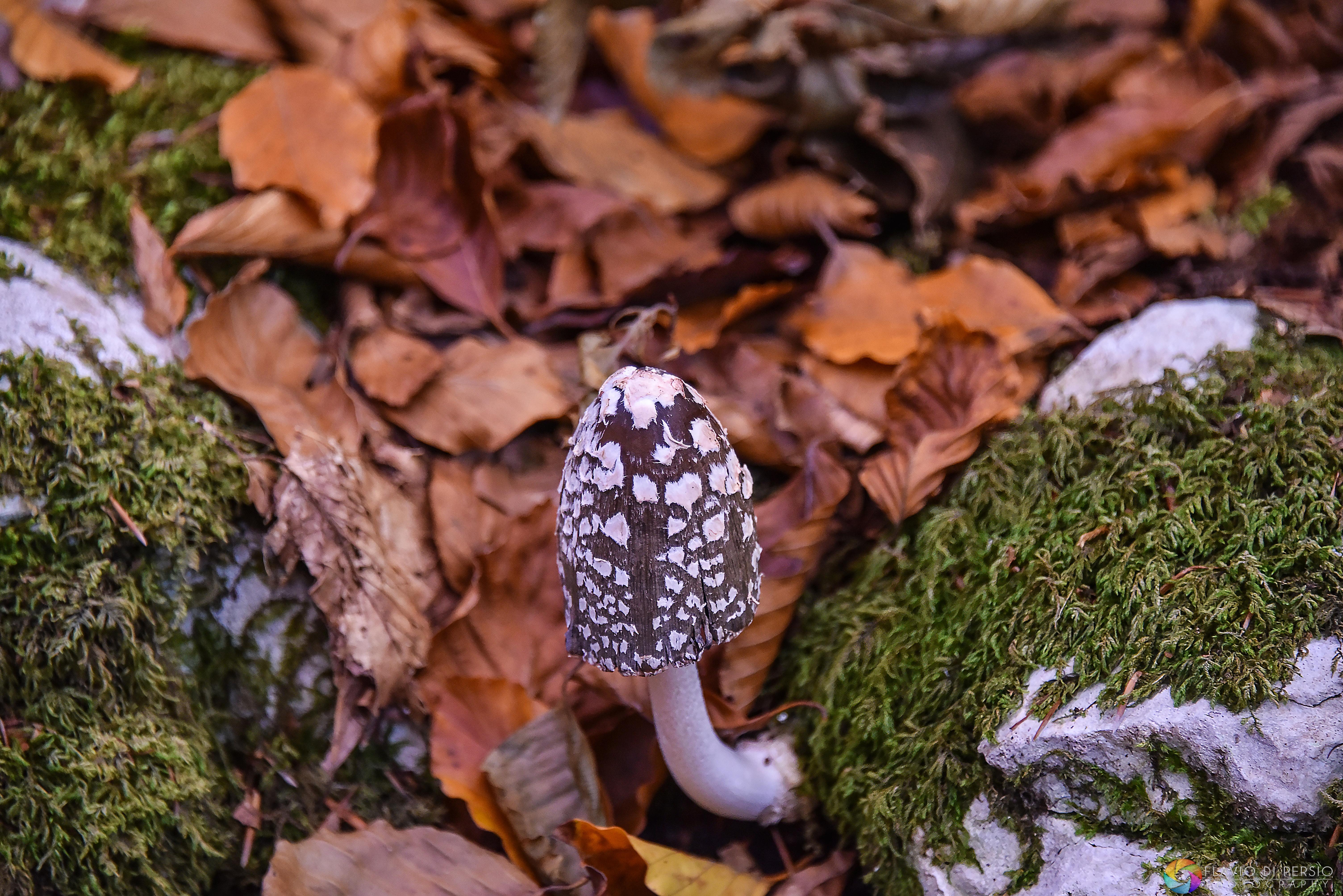 un fungo