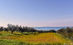 vedute del lago di Bolsena