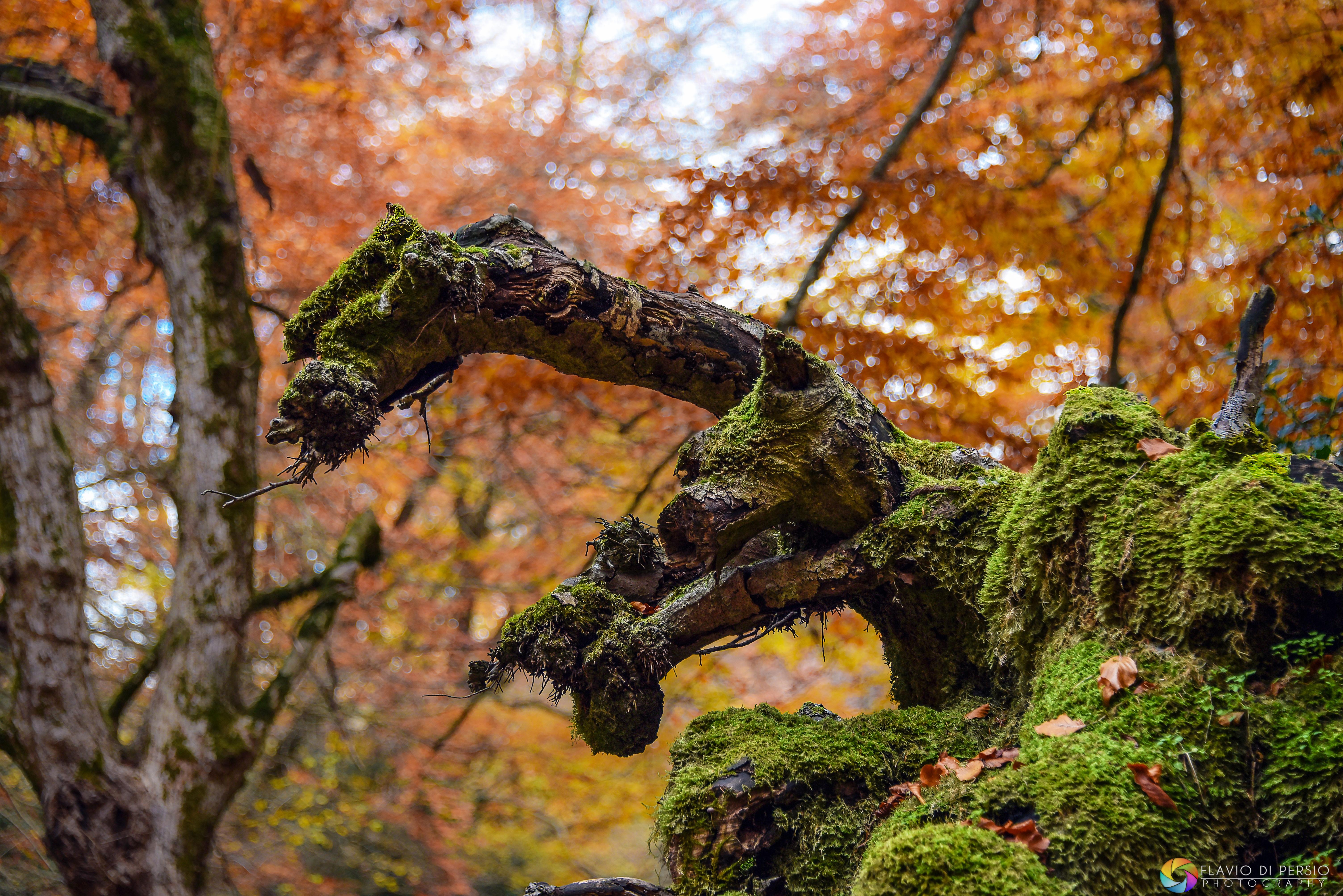 strane forme arboree - un cavallo