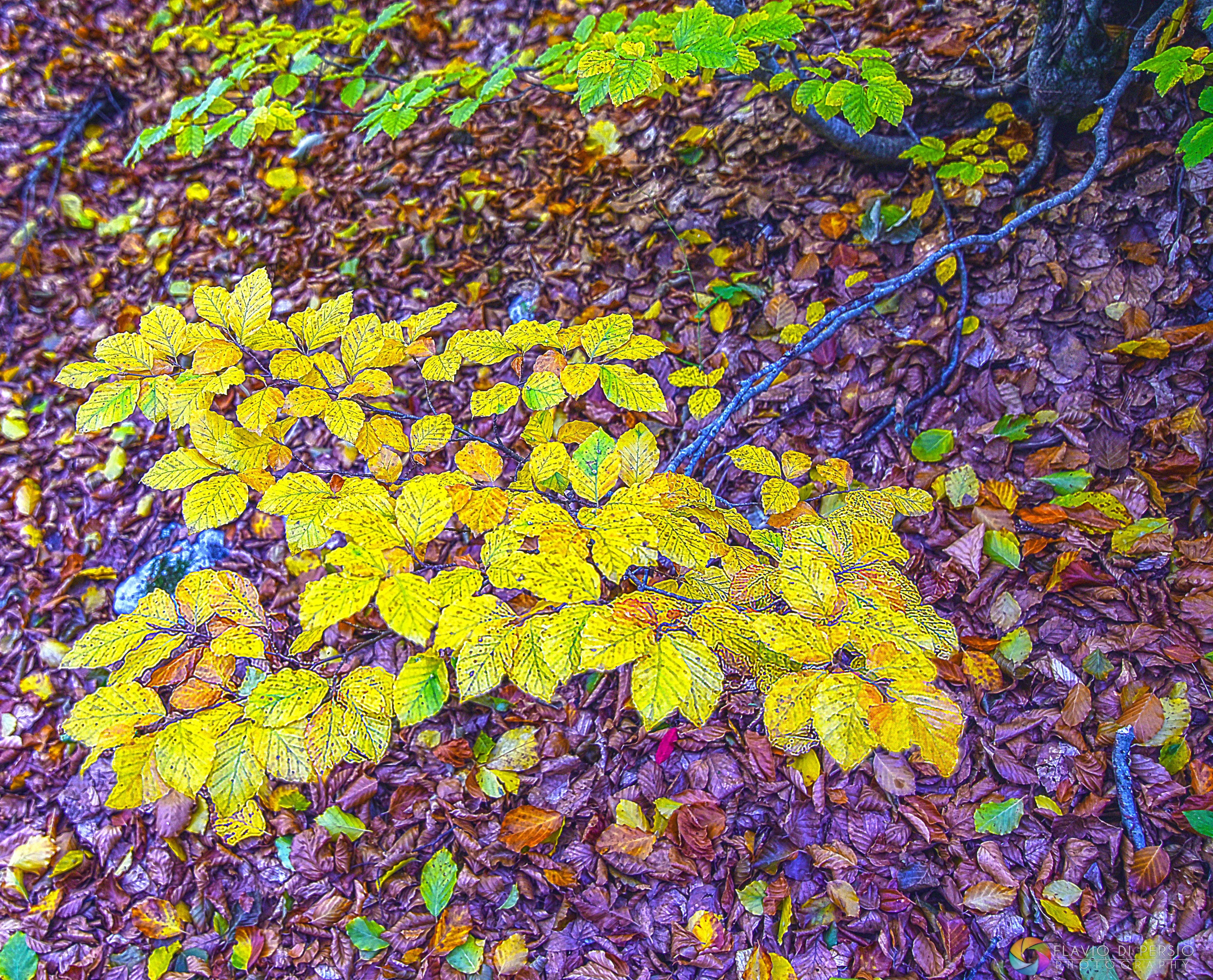 prove d'autunno