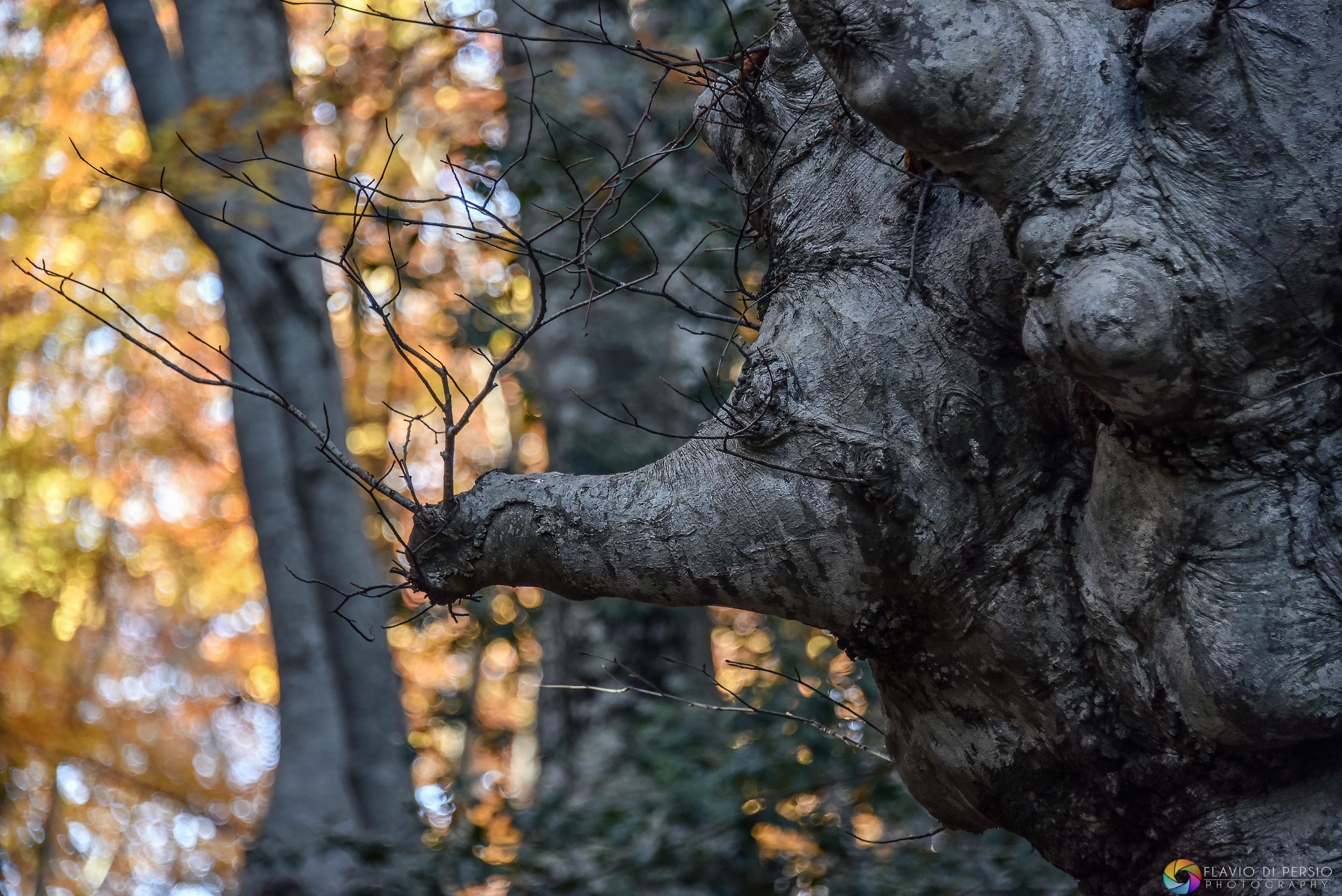 strane forme arboree una proboscide
