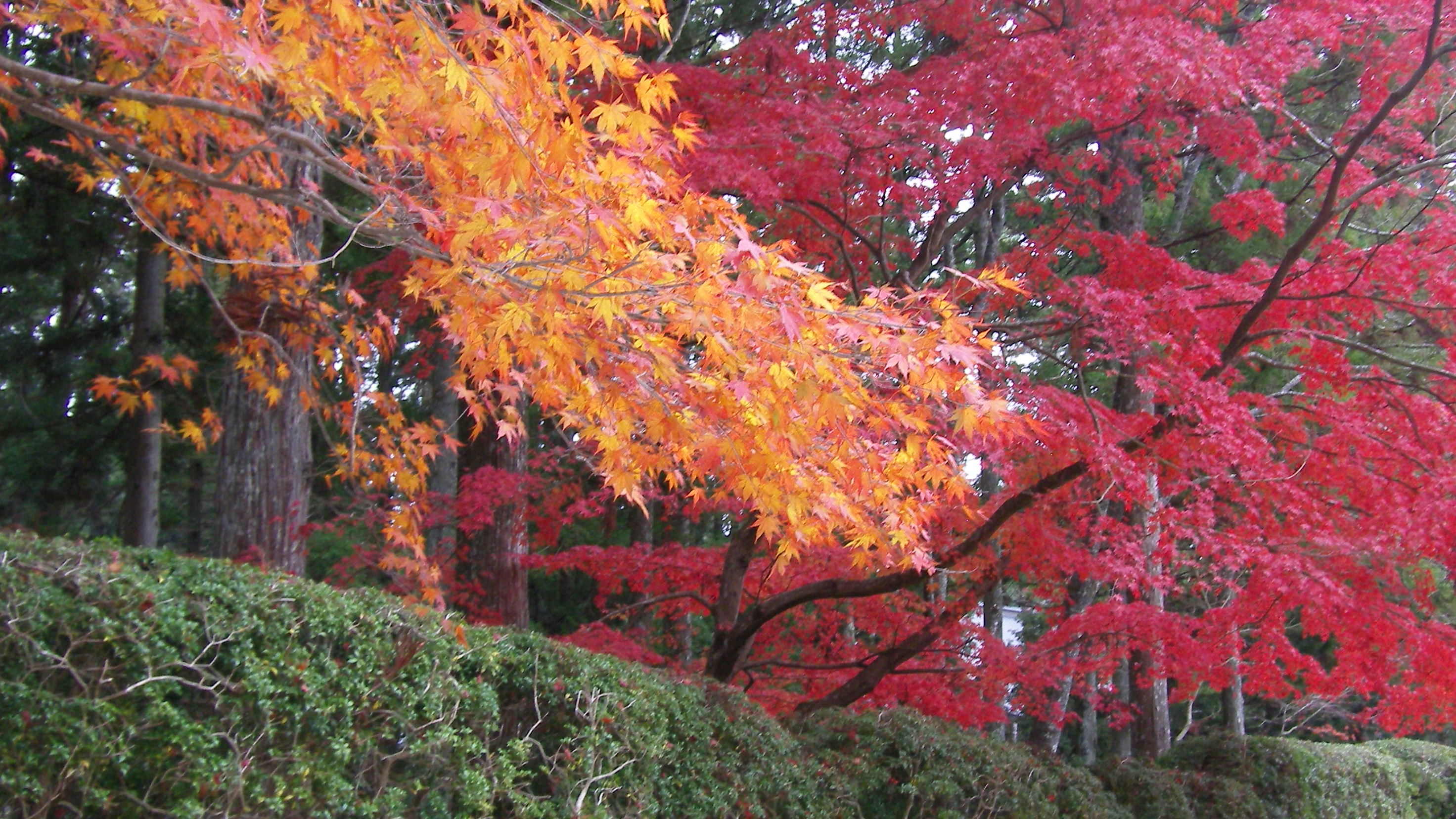 Koyasan in the Fall