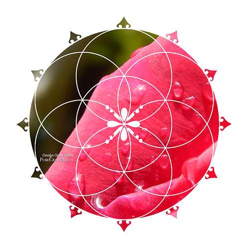 Red Rain Rose Seed of Life Crystal Grid