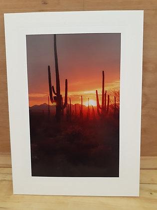 Desert Sunset,Card