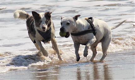 karens dogs.jpg