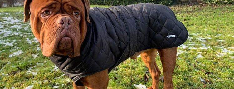 Quilted Waterproof with Collar and Chest Panel