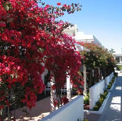 """In Bloom at Glorietta Bay"""