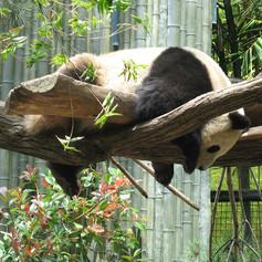 """I Feel You Panda"""