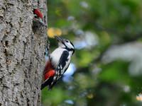 Species in the Spotlight: Woodpeckers