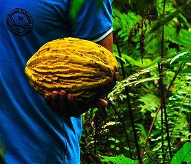 Tarapoto Amazonas Jungle Tours.jpg