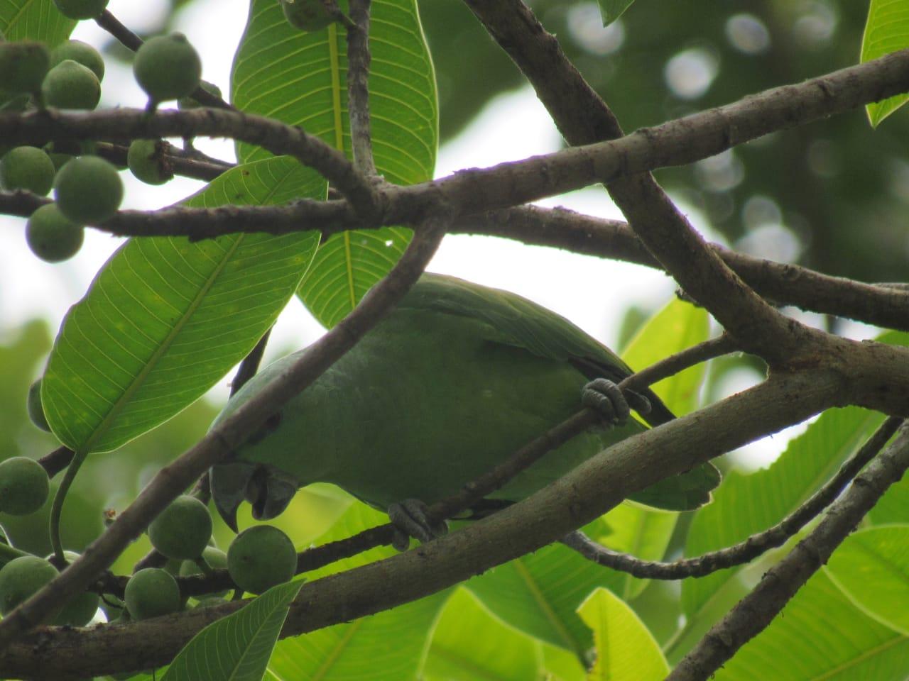 Birds watching in their naturan environment. Photo by Hipilandia Amazonas Jungle Tours.