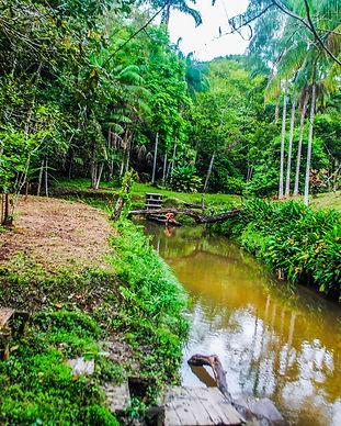 LETICIA RIO CALDERON AMAZONAS.jpg