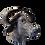 Thumbnail: Tête de buffle