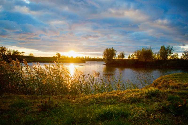 Evening sunset walks. Dog lovers paradis