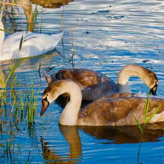 Nature Loving