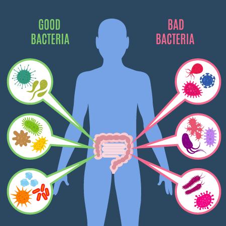 good_bad_bacteria.png