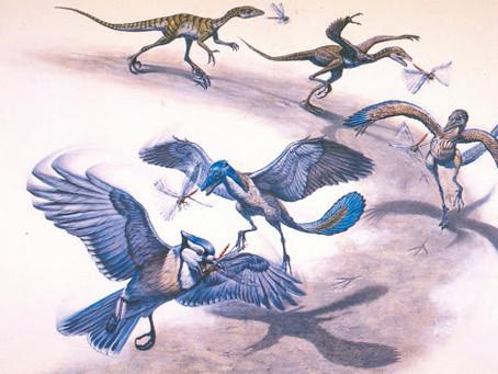 طيورفقدت قدرتها على الطيران أثناء تتابع تطوُّرها الجينى