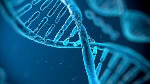 الهندسة الوراثية والتعديل الجيني