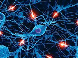لوحة فنية لتنوع خلايا المخ العصبية